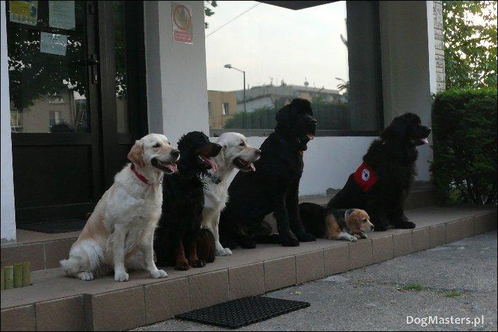 dogmasters